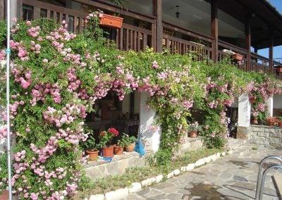 """Къща за гости """"Брезата"""" градина Изглед с рози"""