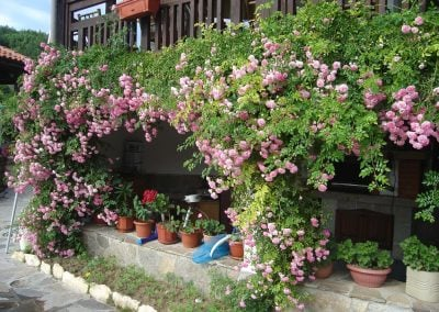 Outside view with roses blooming
